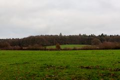 Grass land wood, Hoegne, Ardennes, Belgium. Grass land and woods at the horizon in the nature reserve park of Hoegne in the Ardennes near the High Fens, Hockai royalty free stock photography