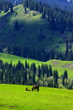 Grass land in Xinjiang Stock Photos