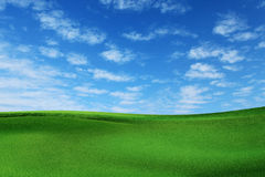 Grass landscape Royalty Free Stock Photography