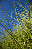 Grass landscape with blue sky and clouds Royalty Free Stock Photos