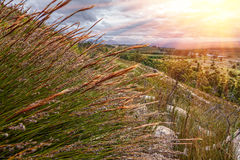Grass landscape in setting sunlight Royalty Free Stock Images