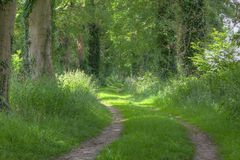 Grass lane in forest with beech Royalty Free Stock Photos