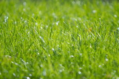 Grass on a lawn Stock Images