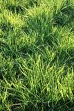 Grass lawn Royalty Free Stock Photos