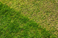 Grass lawn Royalty Free Stock Photo