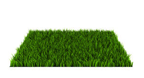 Grass lawn Stock Images
