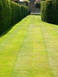 Grass lawn Stock Photo