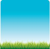 Grass lawn. Clear blue sky and green grass Stock Image