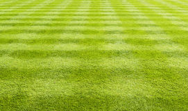 Grass lawn background. Lawn with the grass closely cut in a cross hatched pattern Royalty Free Stock Image