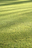 Grass lawn background with evening shadows Royalty Free Stock Photography