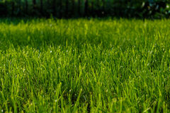Grass lawn. Stock Photos