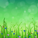 Grass lawn with flower and sunshine in vector flat background. Nice shiny fresh flower grass lawn with bokeh blur effect sunshine beam background. Nature spring Stock Photos