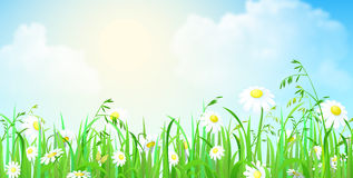 Grass lawn with flowers and sunshine vector background Royalty Free Stock Photo