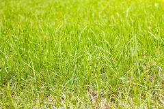 Grass on the lawn Stock Photos