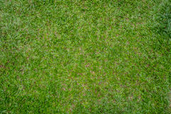The Grass lawn green background Stock Photography