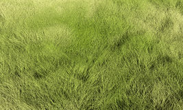 Grass. Lawn or meadow background. Render texture in excellent quality in any part Royalty Free Stock Photos