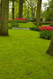 Grass lawn in spring garden Royalty Free Stock Image
