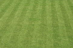 Grass lawn stripe Stock Image