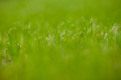 The grass in the lawn Stock Image