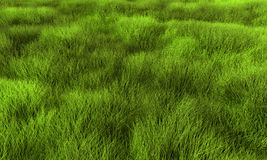Grass. Lawn or swamp background. Render texture in excellent quality in any part Royalty Free Stock Images