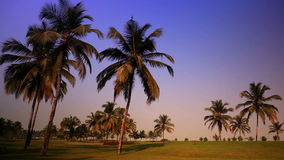 Grass lawn under palm trees during a sunset.  stock video footage