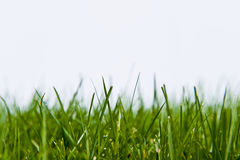Grass Lawn on White Royalty Free Stock Photo