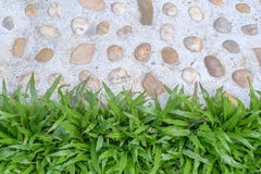 Grass lawn and white rocks pavement Stock Image