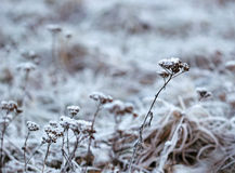 The grass layered with ice crystals in winter time Stock Photos