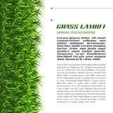 Grass Layout Royalty Free Stock Images