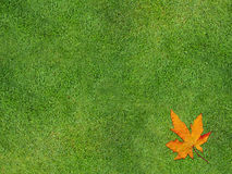 Grass with leaf. Single leaf lying on grass Stock Images