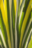 Grass leaf line texture Stock Photography