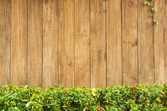 Grass and leaf plant over wood fence. Stock Photography