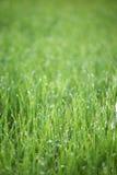 Grass leaf and raindrop. In sun light Stock Photos