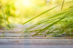 Grass leaning to the bridge under the rays of sun Stock Photo