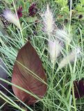 Grass&Leave Royaltyfria Bilder
