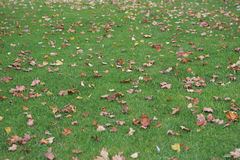 Grass and leaves Royalty Free Stock Images