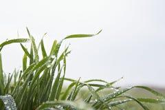 Grass leaves against sky Stock Photos