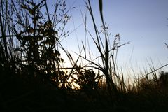 Tall grass grows in the field royalty free stock photography