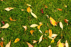 Grass and Leaves. In the Fall Royalty Free Stock Photos