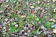 Grass with leaves royalty free stock photography