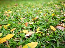 Grass and Leaves. A Grass and leaves in summer Royalty Free Stock Image