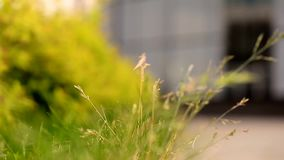 Grass and leaves swaying in the wind. Close. The elements and nature stock video