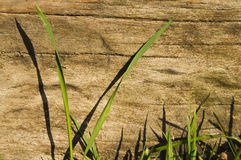 Grass leaves wooden sleeper Stock Photos