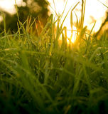 Grass Level Sunrise Stock Photos