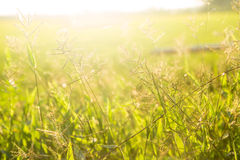 The grass on the light Royalty Free Stock Photography
