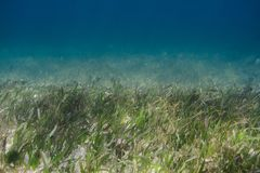 Algae in the ocean floor Stock Photos