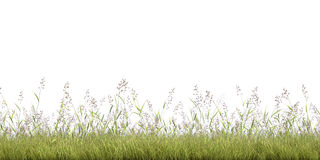 Grass line. Green grass on the white background Stock Image