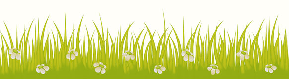 Grass line seamless with flowers isolated on white background us. E for web site design, decoration and other. Vector Illustration Royalty Free Stock Photography