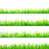 Grass with Little white Daisy. EPS 10 Royalty Free Stock Image