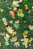 Grass loan with an autumn leaves on it. Stock Image